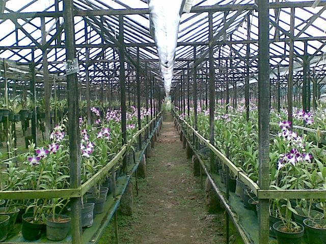 Taman Anggrek Tiga Dolok